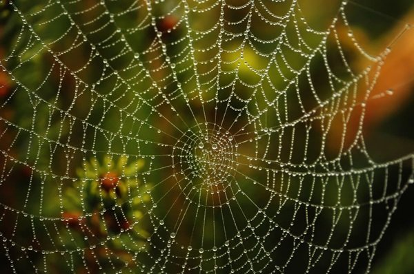 spider-web-with-dew